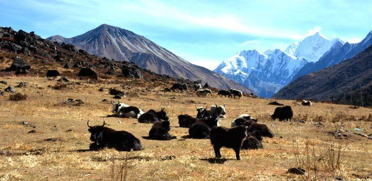 La vallée du Langtang.